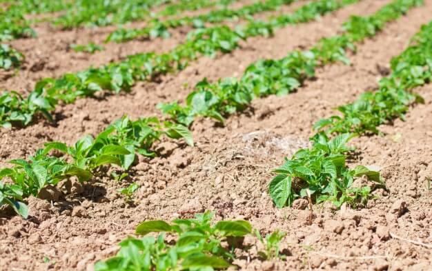 como-preparar-la-tierra-para-sembrar